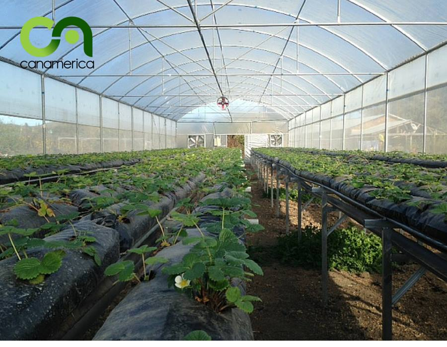 cultivo-hidropónico-canamerica