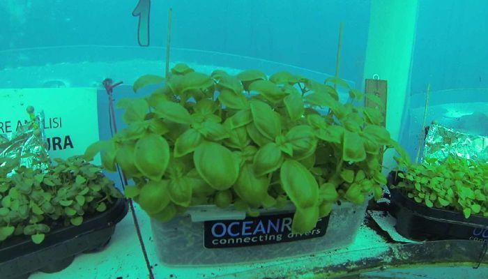 Cultivar en invernaderos bajo el mar