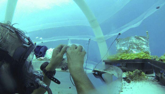 invernaderos-bajo-el-mar2