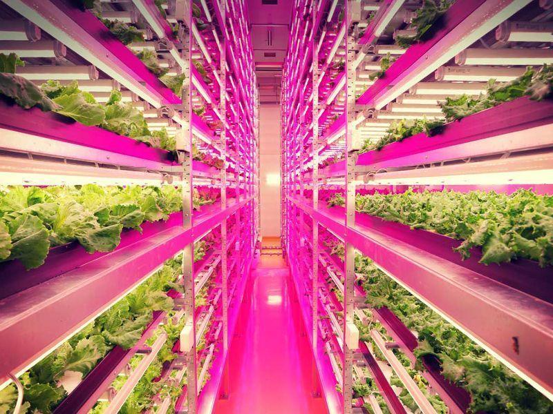 Ventajas e inconvenientes de los cultivos verticales