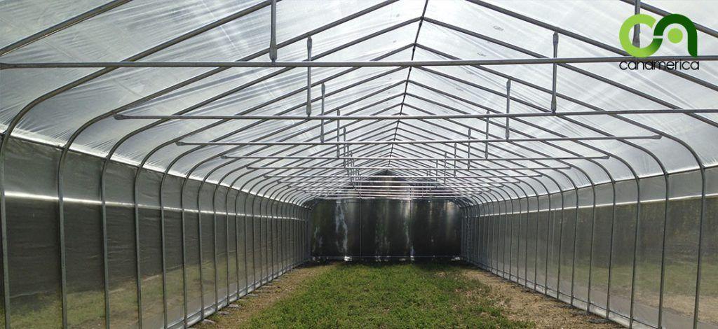 invernadero-tipo-tunel-interior