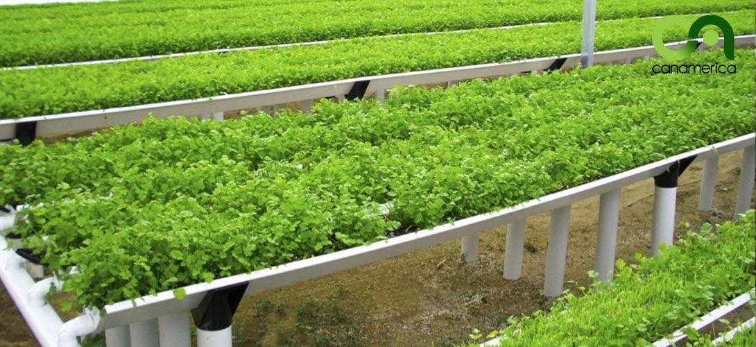 sistema-de-cultivo-canalv-canamerica-2