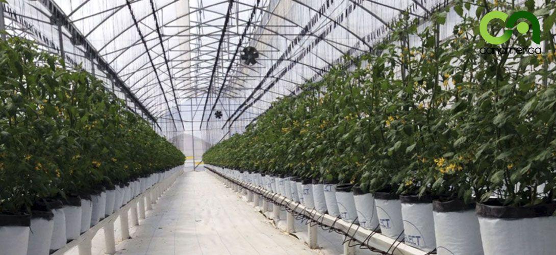 sistema-de-cultivo-canalv-canamerica