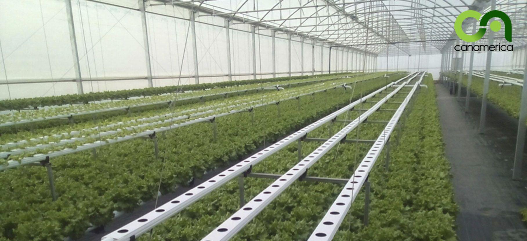 sistema-de-cultivo-nft-canamerica-2