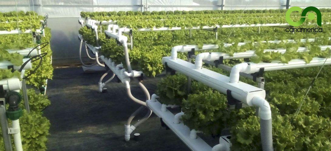 sistema-de-cultivo-nft-canamerica-3