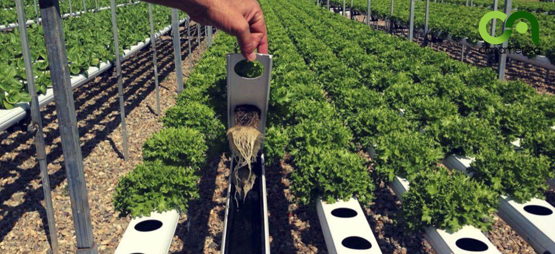 sistema-de-cultivo-nft-canamerica